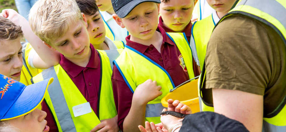Newt beginnings! Housebuilder teams up with local primary school to welcome wild