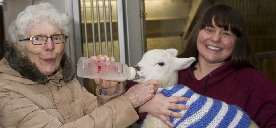 Tight-knit companions donate woolly jumpers to newborn lambs