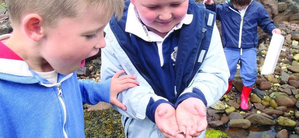 UK charity's online environmental fieldwork lessons attract global audience