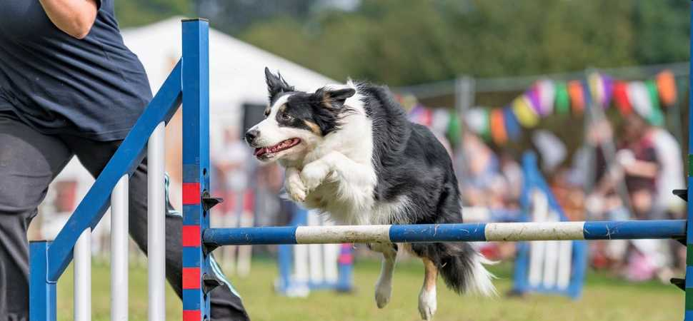Fun Day raises profile of Bath Cats and Dogs Home