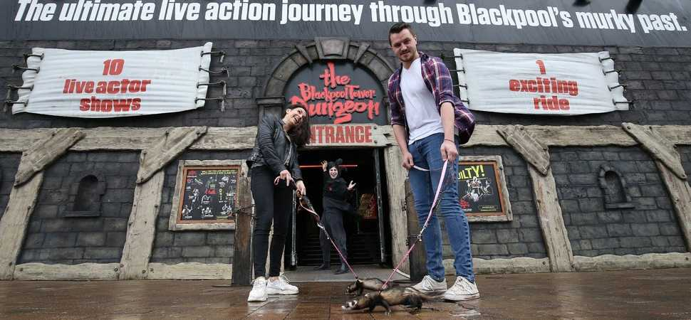 Ferret walking being trialled at Blackpool Tower Dungeon