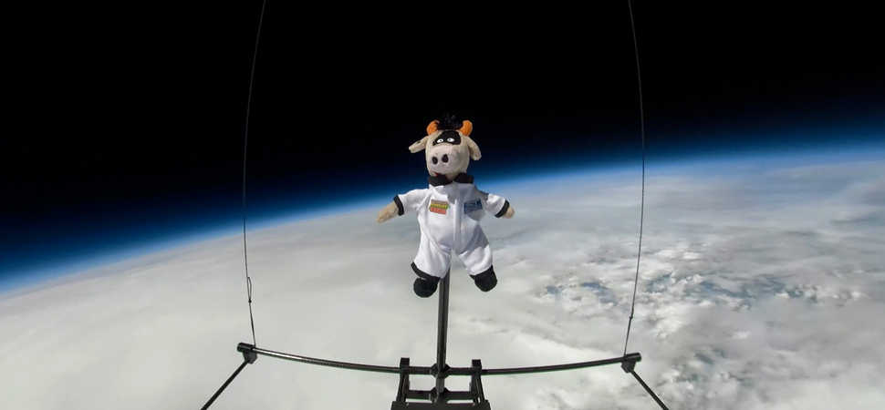 Fluid Ideas helps send cow mascot to the edge of space