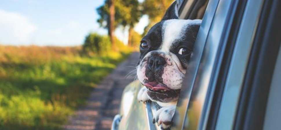 Planning on taking a trip to the North East? Find out the best places to visit with your canine companion!