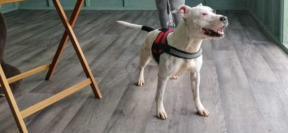 Animal charity receives flooring donation