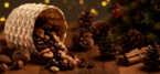 Fairtrade nuts to boost income for smallholder farmers this festive season
