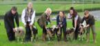 Baa-rton Grange's Flower Bowl house flock of sheep on roof
