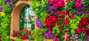 Easy to Grow Autumnal Flowers Likely to be on Display at RHS Chelsea Flower Show