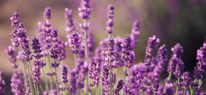 How to use aromatherapy products to balance the mind, body and soul