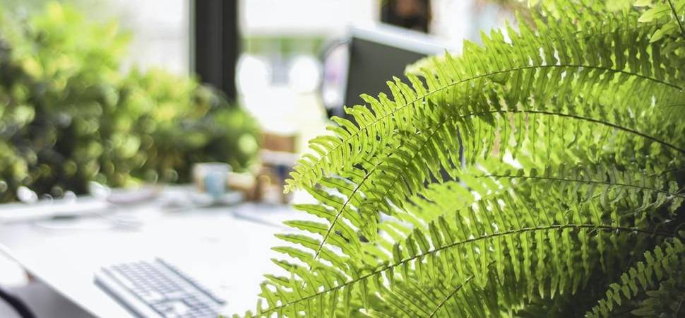 Green Means Gold Sustainability the Key in Attracting Talent