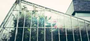 Plastic vs glass greenhouses  which should you choose?