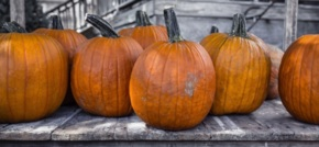 Is your CRM a TRICK or a TREAT to use?