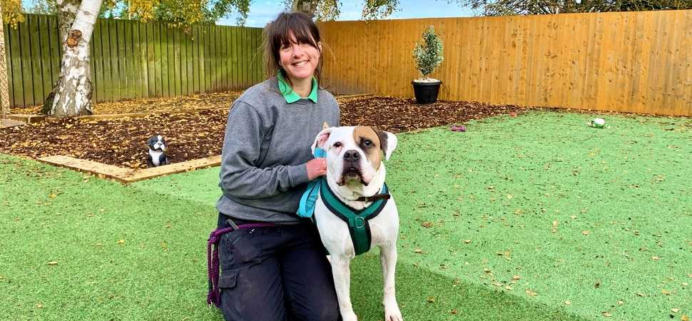 Store comes to the 'rescue' of dog charity