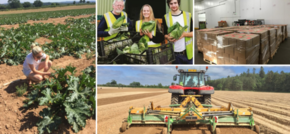 Response to Managing Surplus Produce during COVID-19 - Jess Latchford of Waste Knot