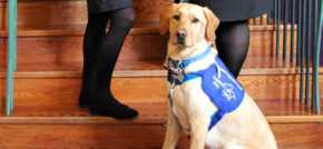 Best Western Plus Kenwoof Hall launches charity partnership with Support Dogs