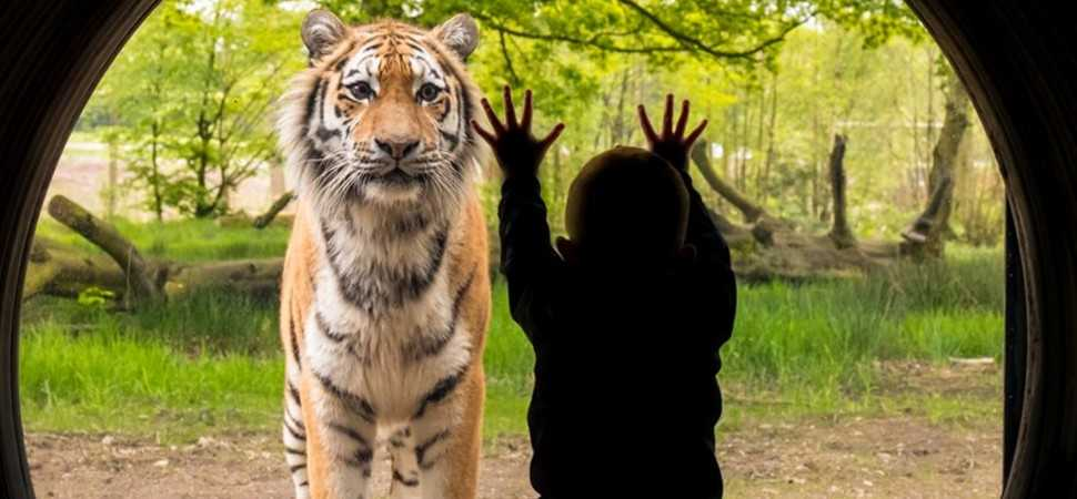Knowsley Safari appoints Media Agency Group to take lead on media planning and buying