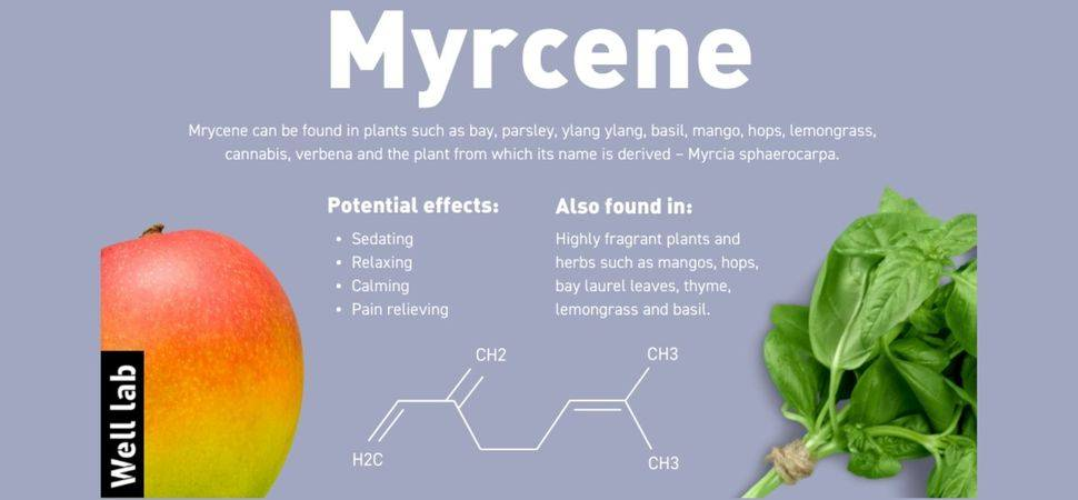 Myrcene Hailed as Miraculous Herbal Remedy to Address Sleep Issues