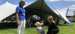 Guide Dog puppies bust stress and raise funds at Winnersh Triangle, Reading