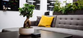 Plant Appreciation Day - Choosing Plants For Your Office