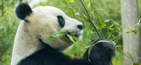 AKA Scotland wins Royal Zoological Society of Scotlands media account