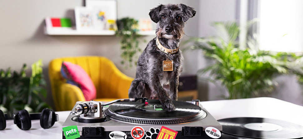 Dinosaur creates new rap video campaign for Pets at Home