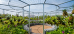 RHS Tatton Headline Sponsor Bruntwood Champions Urban Greening
