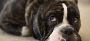 You Need to Follow These Steps to Readjust Your Dog Post-Lockdown