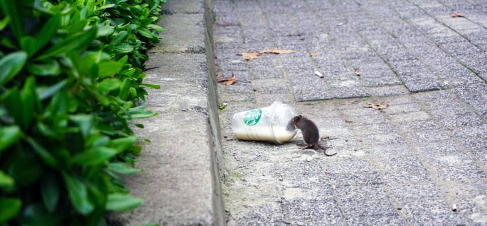 Rise of the Rodents The UKs Fly-Tipping Problem Linked to Pest Infestations