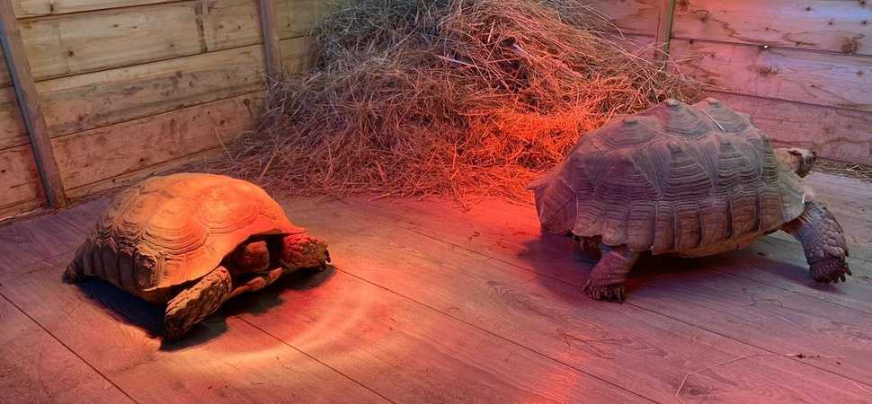 Donation helps tortoises to come out of their shell