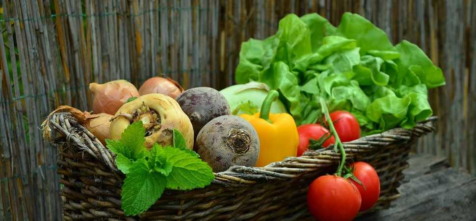 The growth of veganism and the plant-based diet